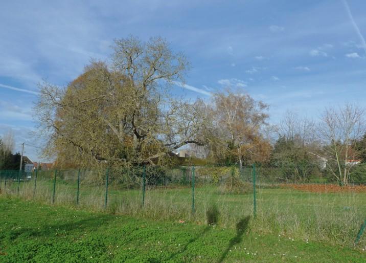 terrains-jardins-de-mireille-citic-716x514